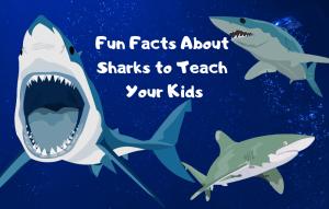 Barry-Brunswick-Fun-Facts-About-Sharks