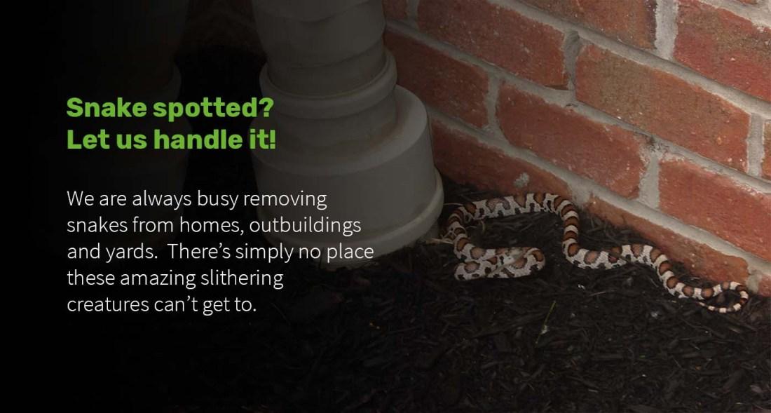 snake-control