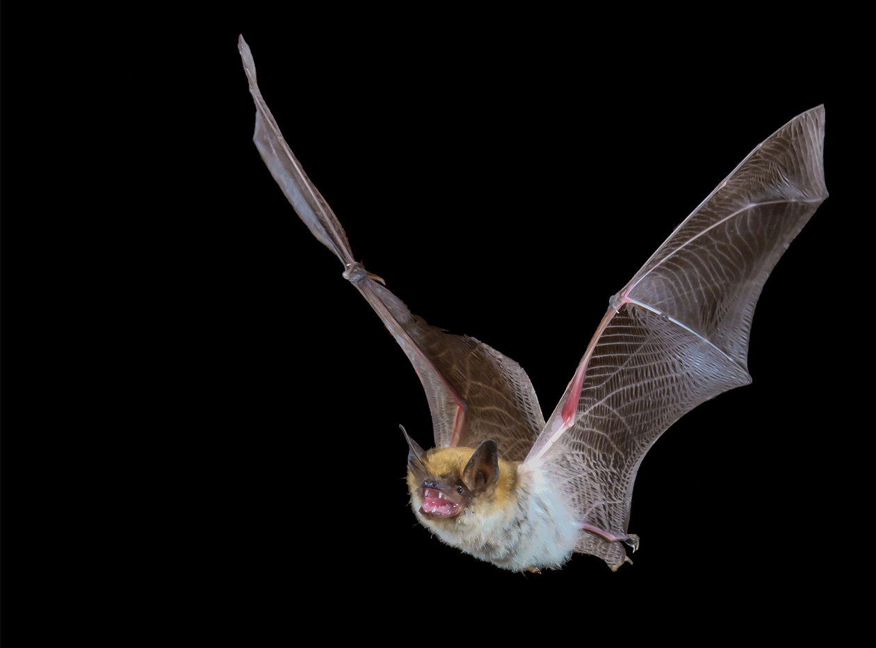 bat-control-removal