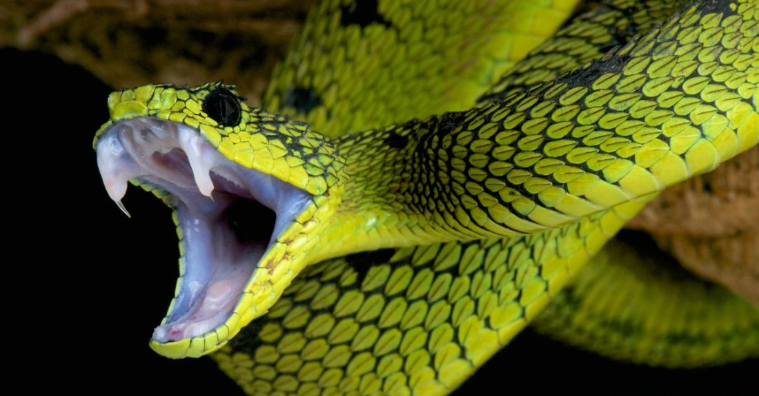 snake-repellent-kenya-nairobi