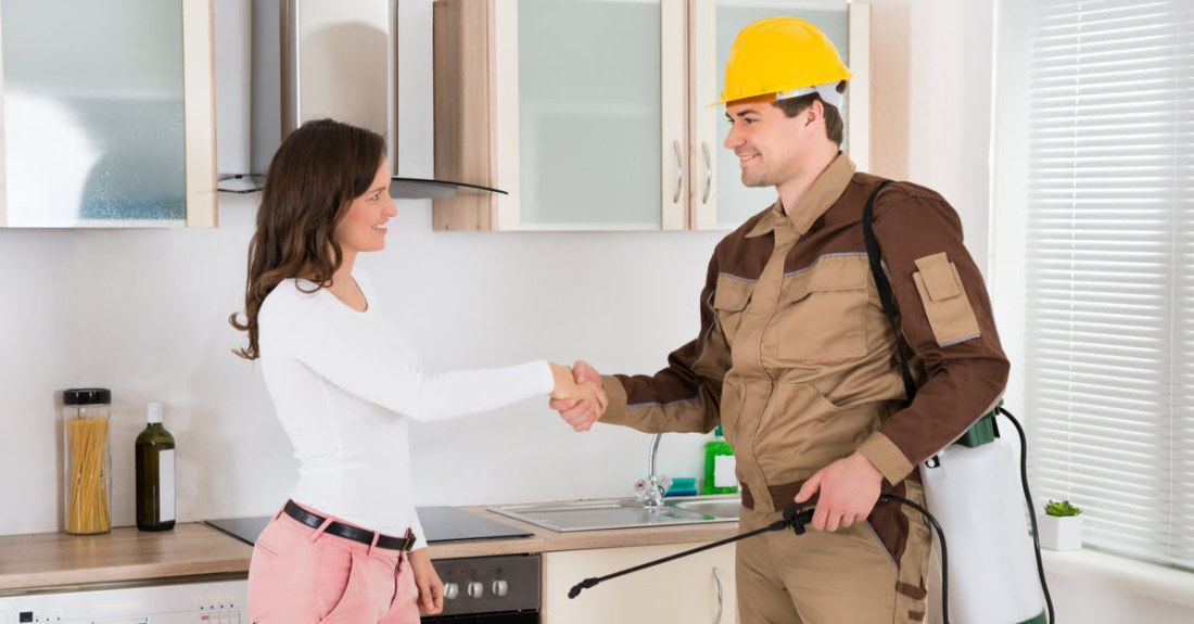 kitchen-pest-control-expert