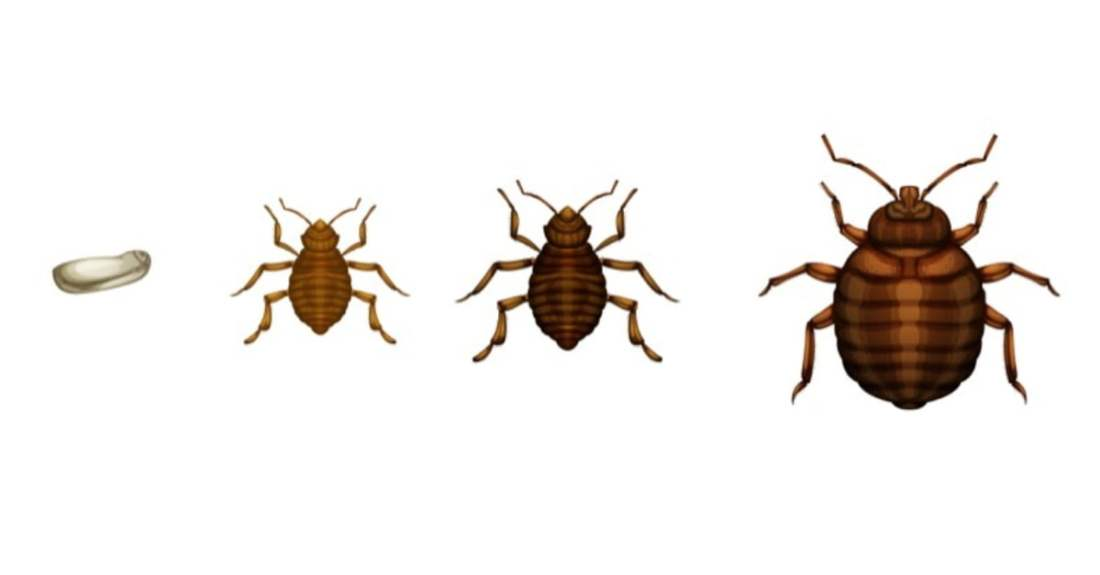 bed bug-kenya-insecticide