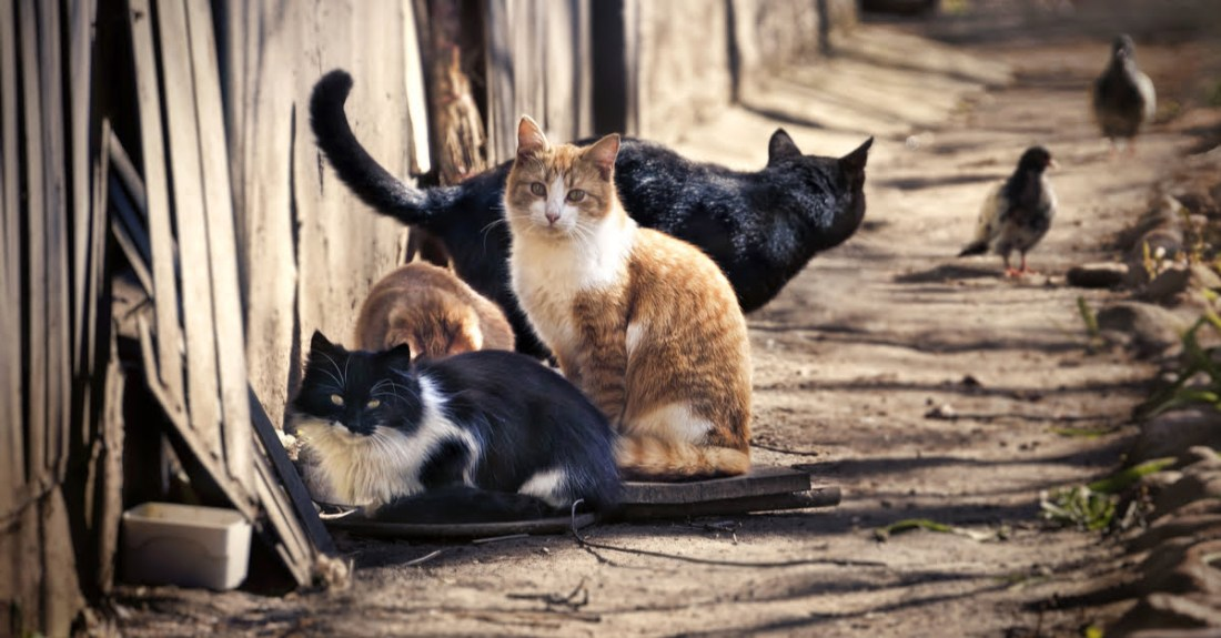 feral cats-stray cats-tamed cats