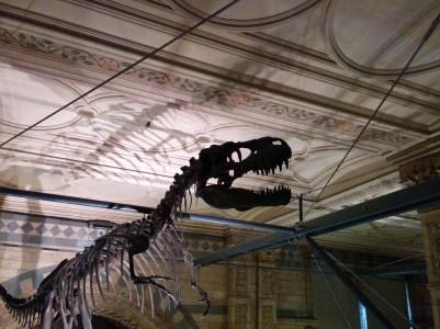 dinosaur-skeleton-profile-867576_960_720