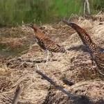 Resgate de flora e fauna na UHE Mauá
