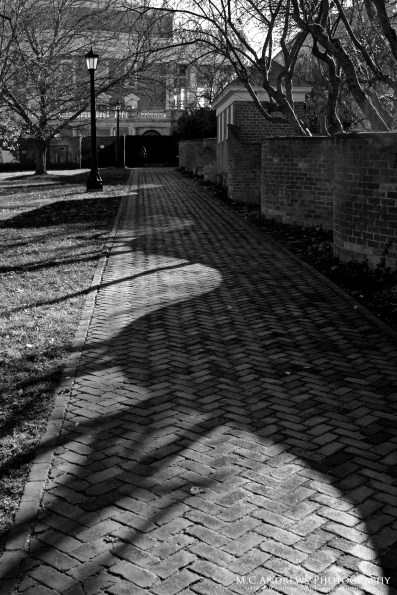 Shadows of the Serpentine BW