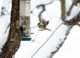 Birdfeeding during the storm-3