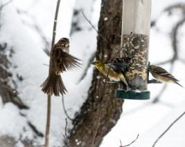 Birdfeeding during the storm