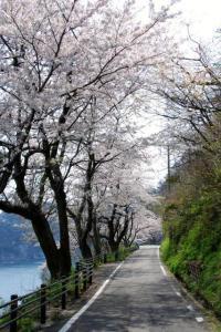 御崎集落へ続く道路