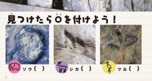 足跡化石設問