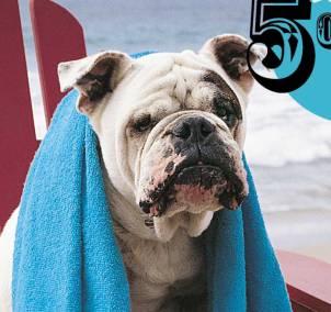 OSAC Cover Dog