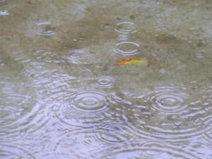 雨 悲しい