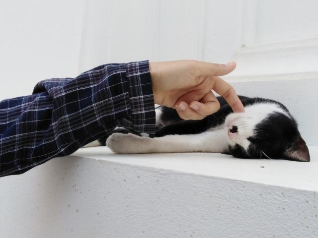 猫 コロコロ 大丈夫