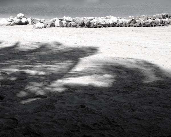 photo of shadows on beach with ocean