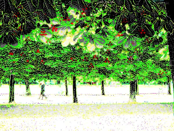 Green trees red berries snow