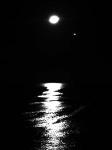 Moonlight-at-Barbados-with-Bird