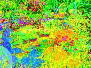 My-Arlington-Garden-Abundance