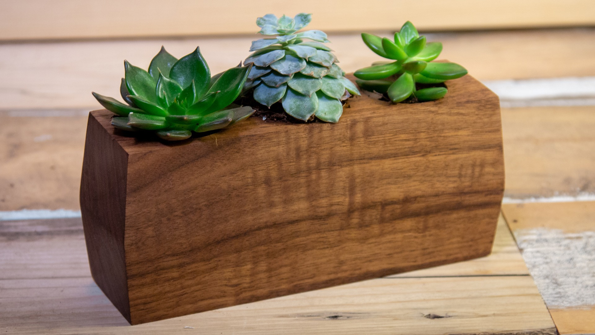 Planter made from a block of walnut for succulent pants