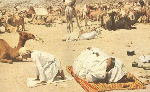 priere-mina-chameau