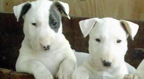 Consejos en la compra de animales: Resolviendo duda