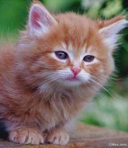 gato-joven.jpg
