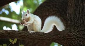 Imágenes de ardillas blancas y albinas