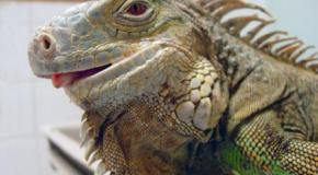 Enfermedades típicas de los reptiles