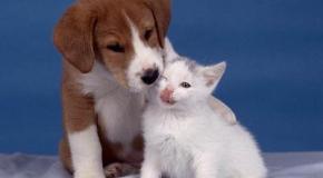 Tener una mascota agradable
