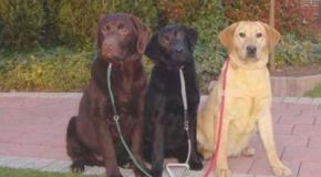 La raza de perro más escogida