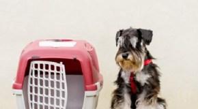 El perro y la jaula de viaje