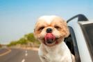 Viajar con perros. 6 tips que nunca deberías olvidar.