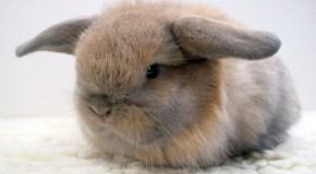 ¿Qué sabes sobre los conejos?