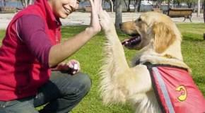 Consejos que podemos tener en cuenta para el cuidado de nuestra mascota
