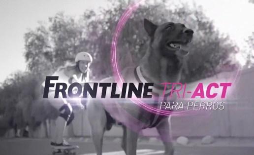 FRONTLINE TRI-ACT, protege a tu mascota contra los parásitos