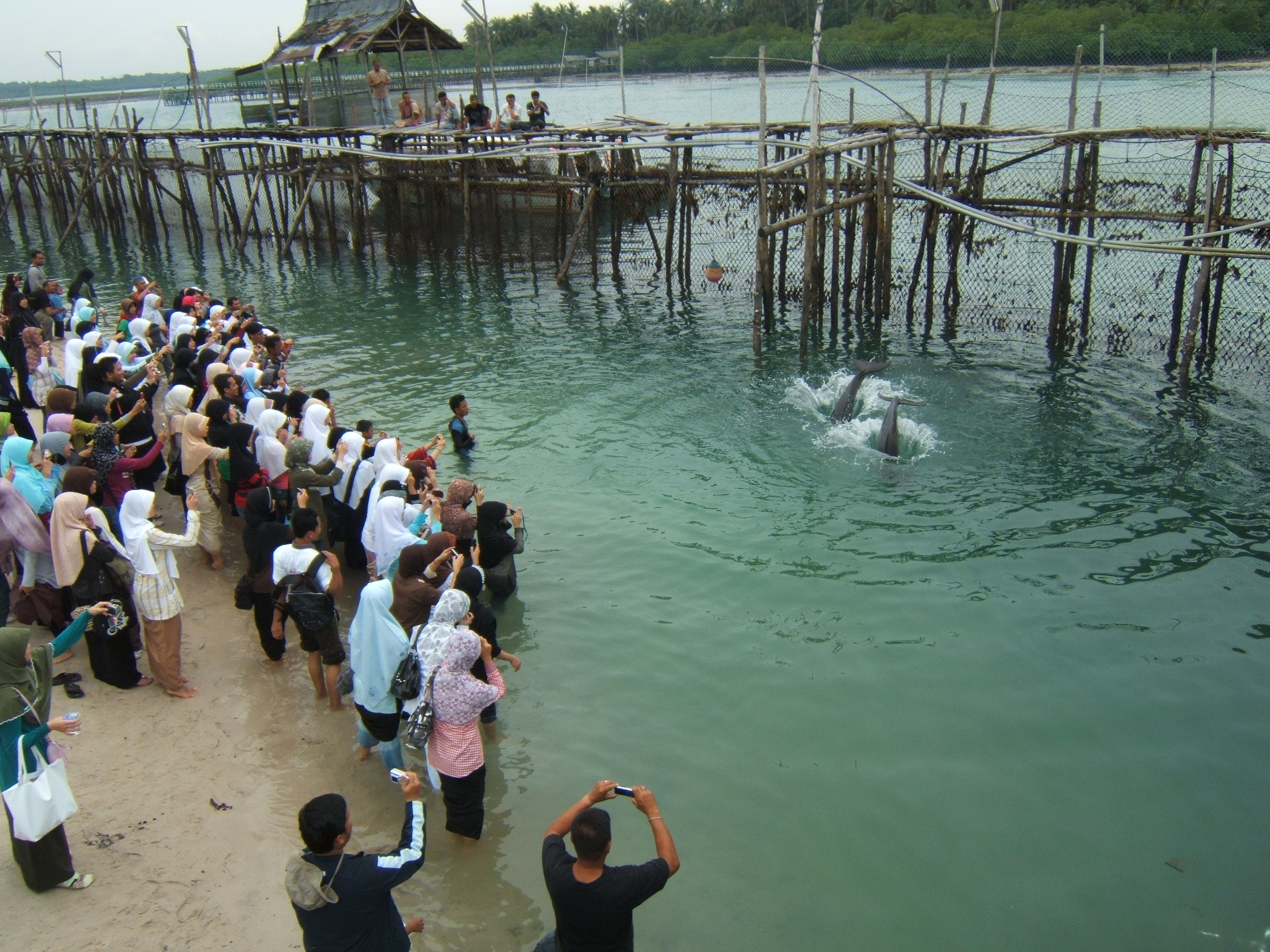 Objek wisata yang terabaikan, pelantar tempat pengunjung melihat atraksi dolphin2 jinak itu pun sudah reot tak terurus lagi, hanya tinggal mengevakuasi kelima ekor dolphin yang tinggal di perairan pulau Mencadas itu , rencana hendak di bawa ke Bali