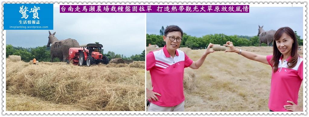 20170817c(生活情報)-茂台南走馬瀨農場栽種盤固拉草-打造熱帶觀光大草原放牧風情01