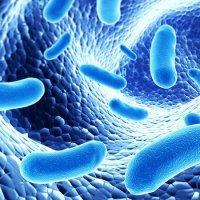 Probiotics – good bacteria