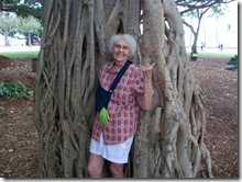 banyan tree-honolulu-hawaii