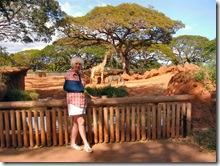 giraffe and zebra honolulu zoo imelda m dickinson (1)