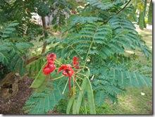 plants-trees-shrubs-flowers-hawaii-honolulu-zoo (5)