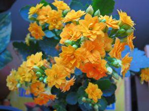 yflowers.jpg