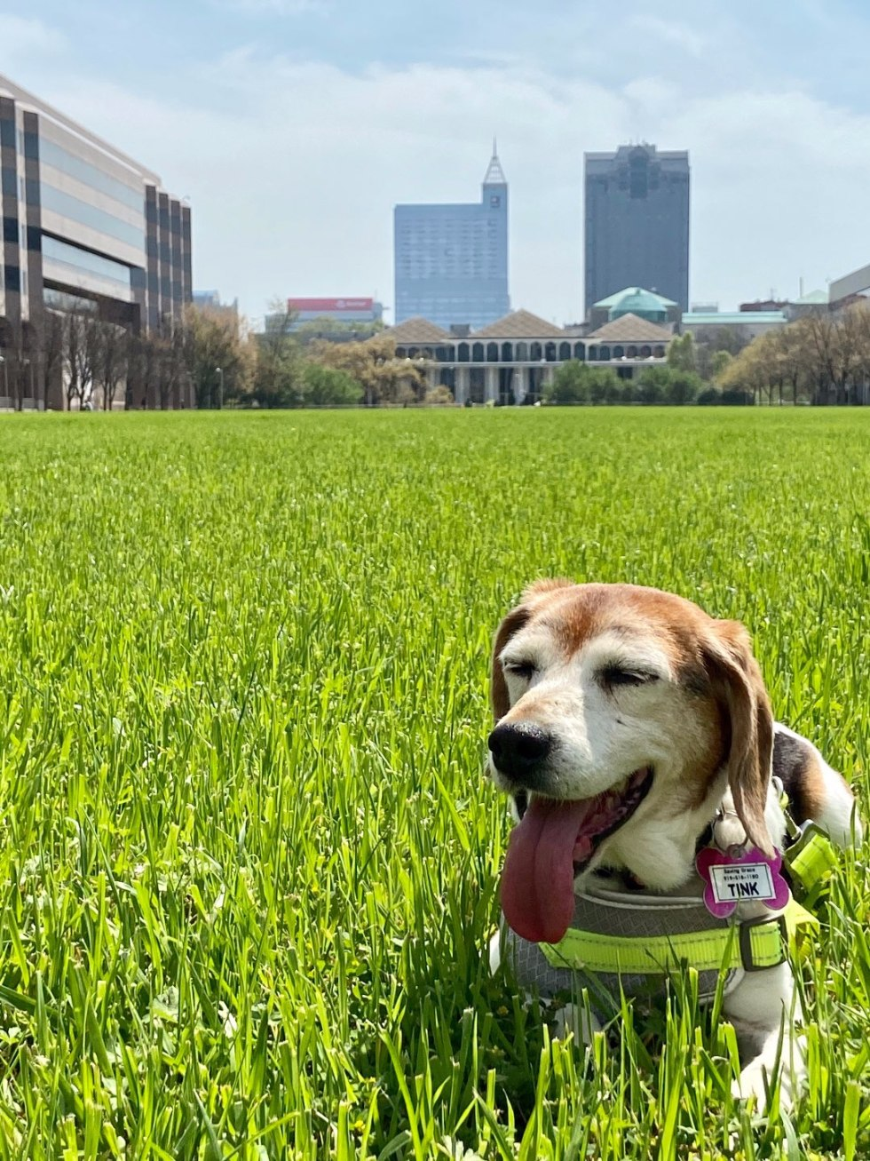 How to Make the Most of Your Time by popular N.C. lifestyle blog, I'm Fixin' To: image of a dog laying in the grass.