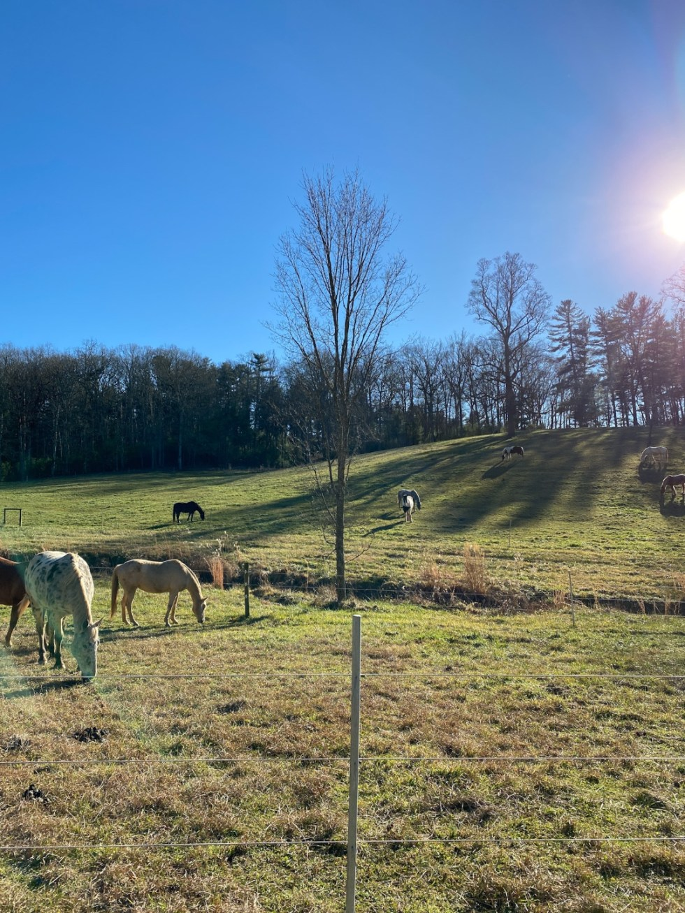 Christmas in Asheville: a Weekend Getaway During the Holidays - I'm Fixin' To - @imfixintoblog |Christmas in Asheville NC by popular NC lifestyle blog, I'm Fixin' To: image of some horses grazing outside in a pasture at The Winery.