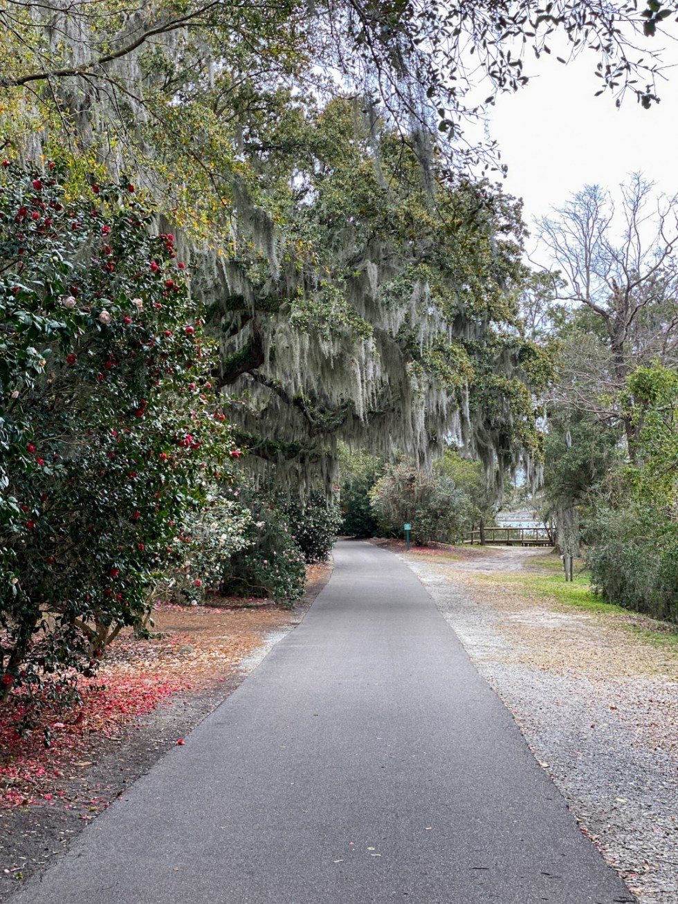 A Spring Weekend in Wilmington, NC: the Best Things to Do - I'm Fixin' To - @imfixintoblog |Weekend in Wilmington by popular NC travel blog, I'm Fixin' To: image of a paved walking path in Airlie Gardens.