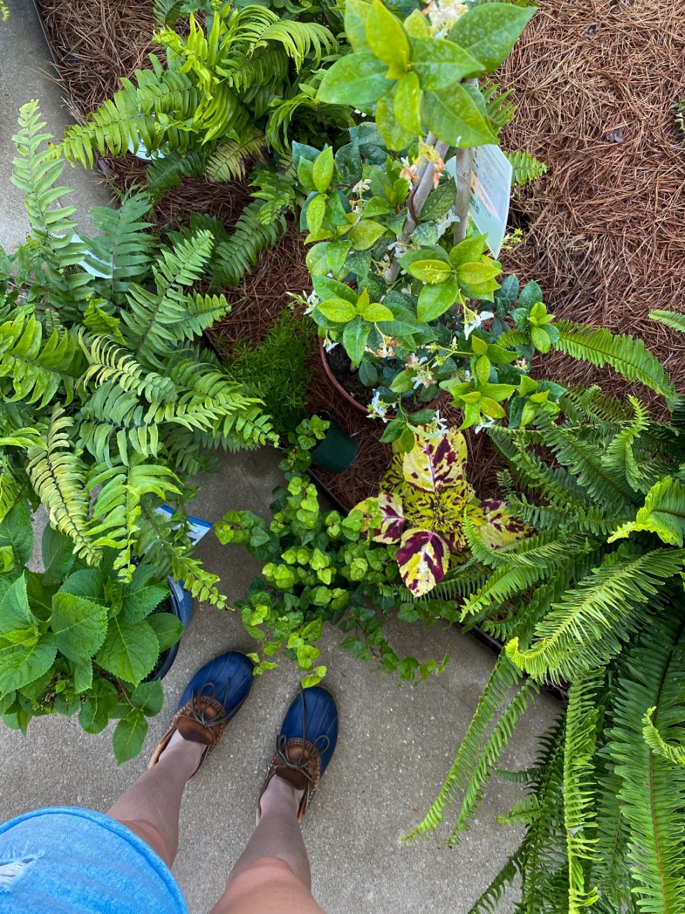 5 Spring Planting Tips with Fairview Garden Center - I'm Fixin' To - @imfixintoblog |Best Plants to Plant in Spring by popular NC lifestyle blog: image of ferns at the Fairview Garden Center.