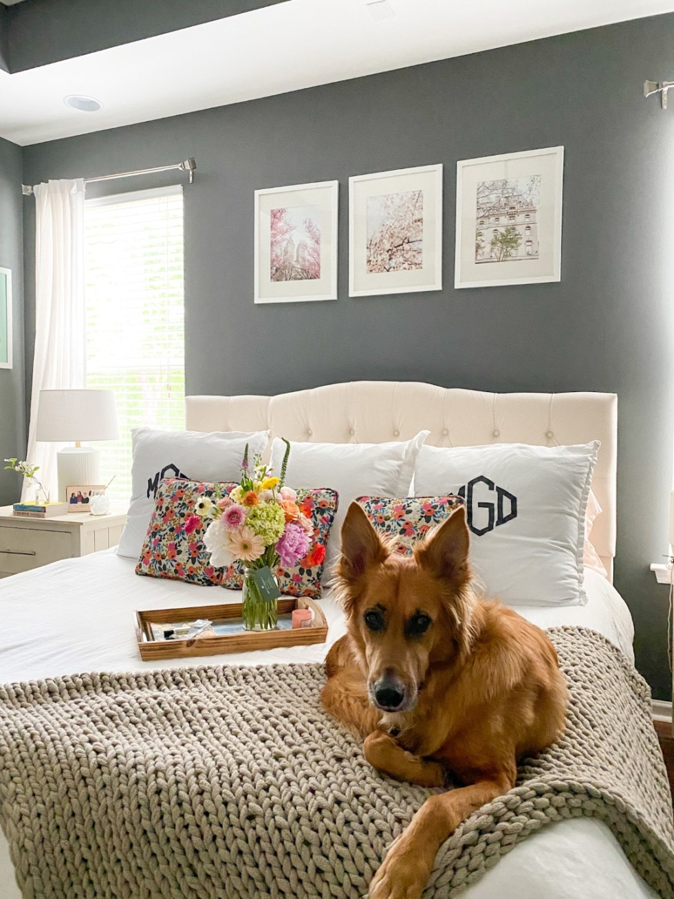 Home Decor: 7 Spring Prints for your Gallery Wall - I'm Fixin' To - @imfixintoblog | Spring Prints by popular NC life and style blog, I'm Fixin' To: image of a dog sitting on a bed with a cream tuft head board, white bedding, floral print throw pillows and spring prints in white frames hanging above it on a grey accent wall.