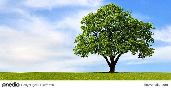 Ağaç ne kadar yüksek olursa olsun, yaprakları yine de yere dökülür.
