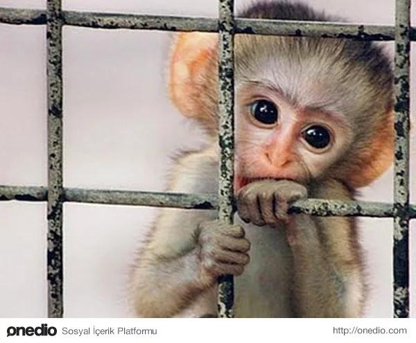 Kosta Rika Cumhuriyeti hayvanlara özgürlük vereceğini açıkladı.