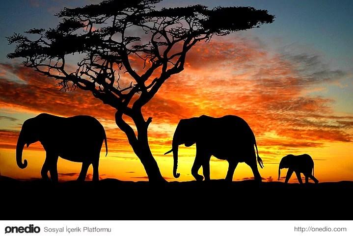 Hamilelik süreleri yaklaşık 2 yıl sürer ve yeni doğan yavru filler ortalama 100 kilo civarında olur.