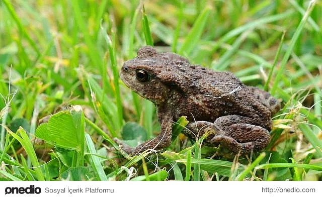 Fransa'da Kurbağaların Otoyoldan Rahat Geçebilmesi İçin Tünel İnşa Edildi